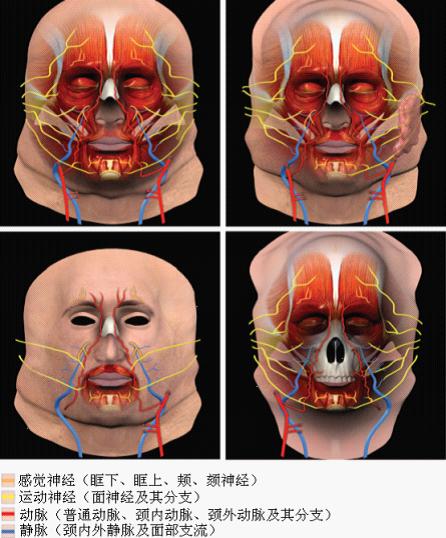 揭秘神奇的全脸移植技术